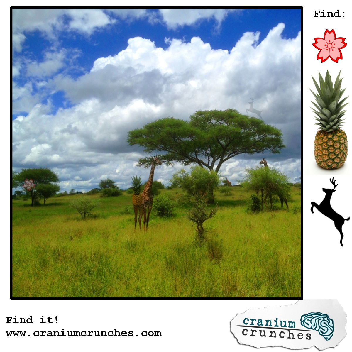African Giraffe Find It