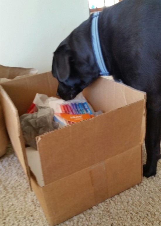 Bubs the dog helps check out the donations! Just making sure that no one put in an extra rawhide.